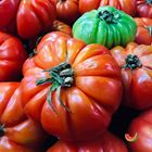 Picture of TOMATO ADELAIDE 1KG