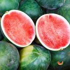 Picture of SEEDLESS WATERMELON  6 - 9KG