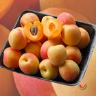 Picture of APRICOT VICTORIAN 1KG P/PACK