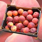Picture of PEACH YELLOW 5KG BOX