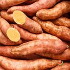 Picture of POTATO SWEET GOLD  1KG