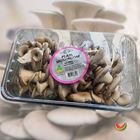 Picture of PEARL MUSHROOM  400G