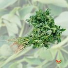Picture of FENUGREEK  2 FOR $3.30
