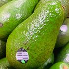 Picture of AVOCADO SHEPARD 2 FOR $8.80