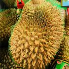 Picture of DURIAN IMPORTED 1.5KG+