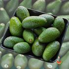 Picture of AVOCADO SHEPARD 1KG PACK