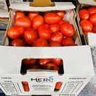 Picture of TOMATO ROMA 10KG BOX