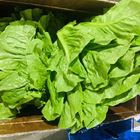 Picture of LETTUCE COS WHOLE 10 PIECES  BOX