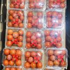 Picture of TOMATO CHERRY 15 PUNNETS TRAY