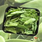 Picture of SNOW PEAS 1KG P/PACK