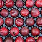Picture of PLUM SEPTEMBER CANDY 1KG