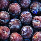 Picture of PLUM BLACK MAJESTY 1KG