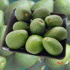 Picture of AVOCADO HASS 1KG P/PACK