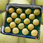 Picture of PEAR NASHI TRAY