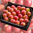 Picture of APPLE PINK LADY CRUNCHY 5KG BOX
