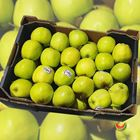 Picture of APPLE GOLDEN DELICIOUS 5KG BOX