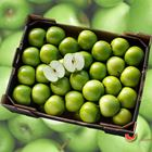 Picture of APPLE GRANNY SMITH CRUNCHY 5KG BOX