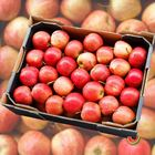 Picture of APPLE ROYAL GALA 5KG BOX